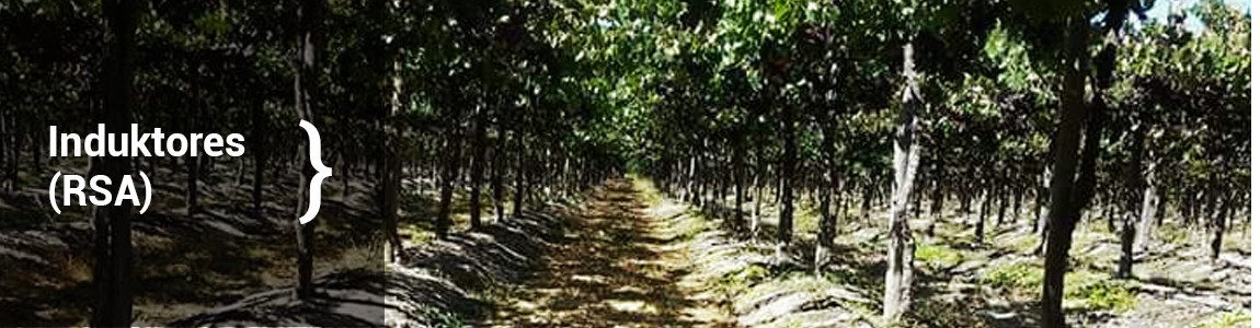 Fertilizantes que nutren eficientemente a la planta