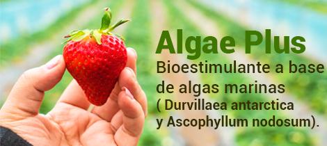 algae plus