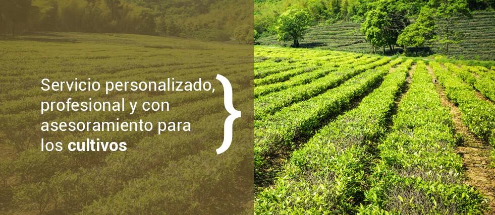 Servicio personalizado, profesional y con asesoramiento para los cultivos.